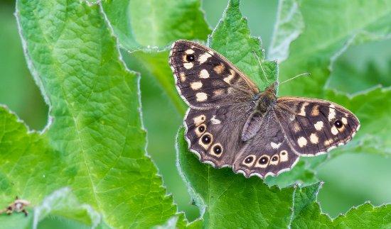 Purfleet, UK: Butterfly