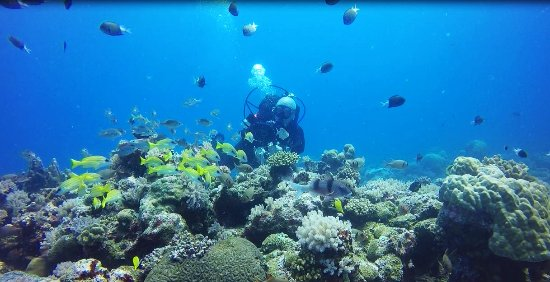 Pereybere: One of aquarium-like diving sites
