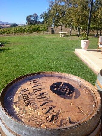 Launceston, Avustralya: The vines at Sharmans wines