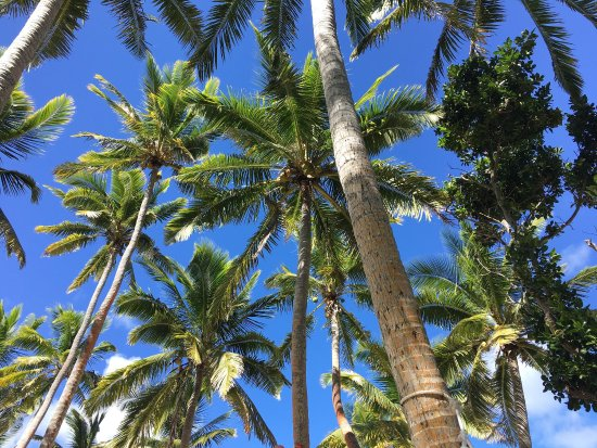 Tavewa Island, Fiji: photo1.jpg