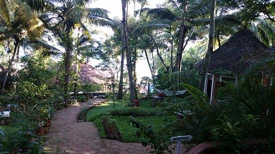 Chowara, Indien: Lush greenery everywhere