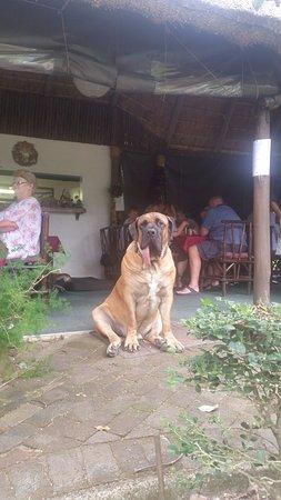Pennington, Sudáfrica: Sebastian the coffee shop Mascot