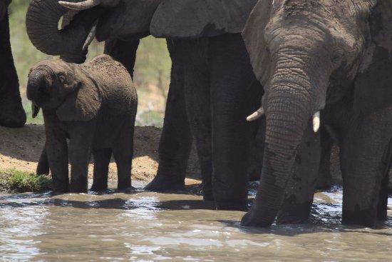 Hoedspruit, Sudáfrica: The waterhole... the happy place of all elephants