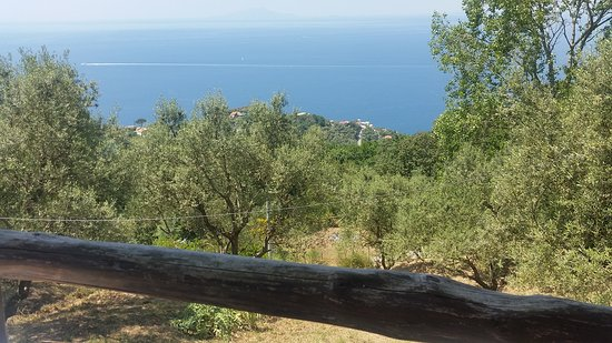"Gocce di Capri Restaurant: 20170517_134441_large.jpg"""