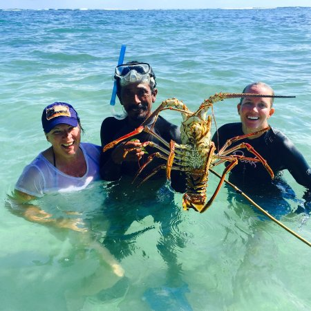 Isla Bastimentos, Panama: Lobster diving with Jose!