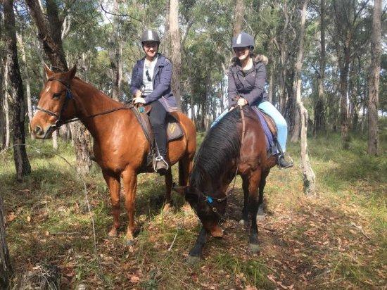 Margaret River, Australia: Our horses Jacko (left) and Dakota (right)