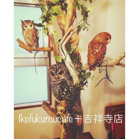 Ikefukuro Cafe Plus Kichijoji