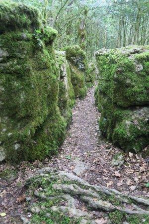 Belvianes et Cavirac, Francja: A diez minutos de Maison Templaire, un laberinto natural para recorrer kilómetros.