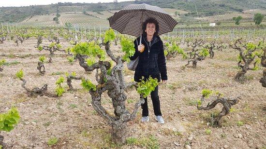 Cenicero, Spanien: Viñas Tritium - La Rioja