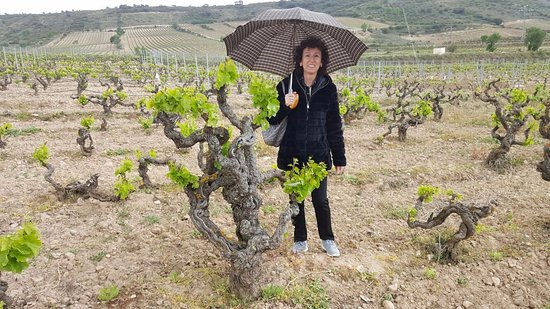 Cenicero, สเปน: Viñas Tritium - La Rioja