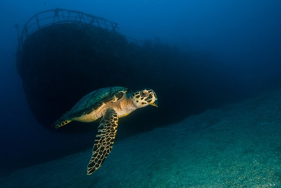 St. Eustatius: Turtles love the Chien Tong wreck