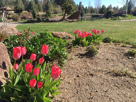 Terrebonne, OR : Signs of Spring