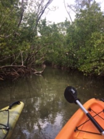 Sarasota Paddleboard Company: Mangroves