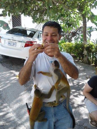 Villas de la Selva: Monos Ardilla !