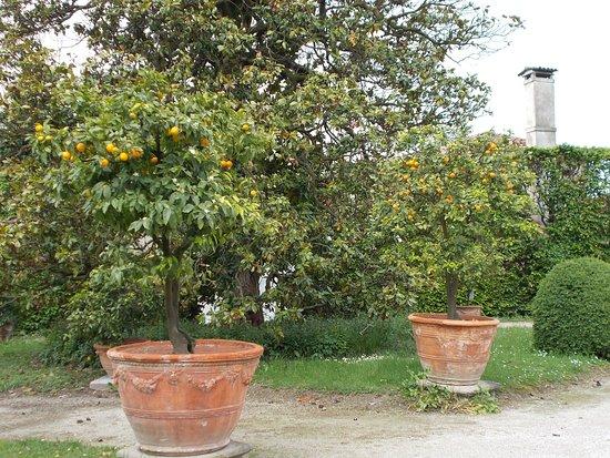 Stra, Italia: nel giardino di limoni