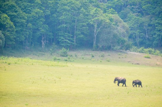 KTDC Lake Palace Thekkady: Elephant Family out for a stroll
