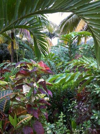 Marigot, Dominika: Trädgården