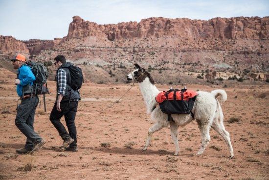 Idaho Falls, ID: Guided llama hikes perfect example of what to expect