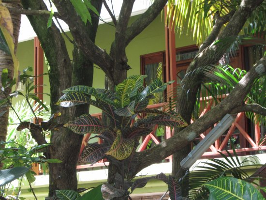Marigot, Dominica: Outside the main building and one can see upgraded room