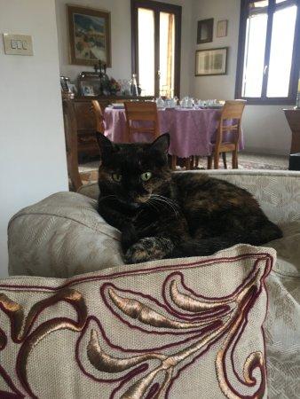 Sandra B&B : Хозяйская кошка