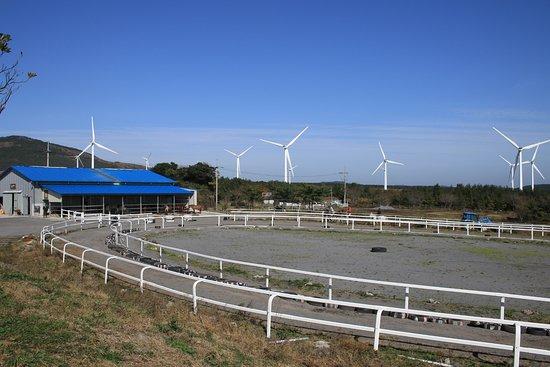 Jeju Horse Park