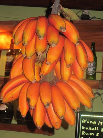 Marigot, Dominica: Red Bananas in the bar decoration