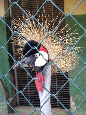 Guaratiba, RJ: Animais exóticos.