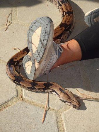 Guaratiba, RJ: Interação com a cobra