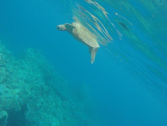Maalaea, Hawaï: photo0.jpg