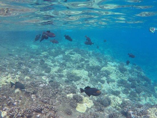 Maalaea, Hawaï: photo1.jpg