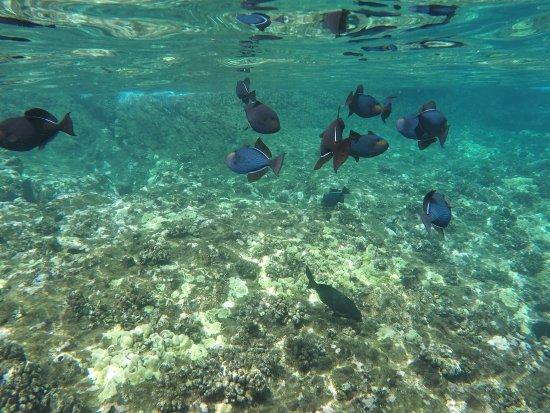 Maalaea, Hawái: photo3.jpg