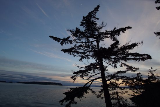 Halfmoon Bay, Canadá: The iconic pine in the setting sun.