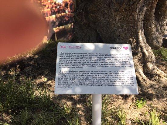 Vila Nogueira de Azeitao, Portugal: Dados da Oliveira