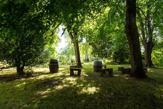 Libourne, Frankrike: The woods