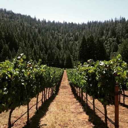 A view of the Nash Mill Vineyard in Philo, we make 100 cases of Pinot Noir from here.