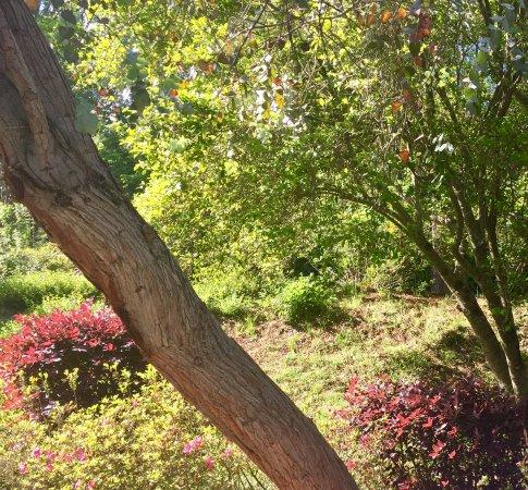 Florien, LA: Hodges Gardens