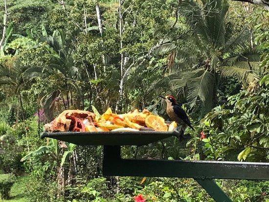 Nuevo Arenal, Costa Rica: photo1.jpg