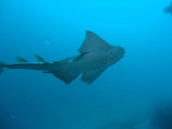 Manta Diving Lanzarote: photo0.jpg