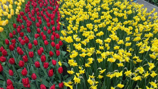 Lisse, The Netherlands: Keukenhof Gardens Abril 2016