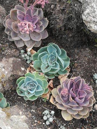 Lismore, Ireland: Plants