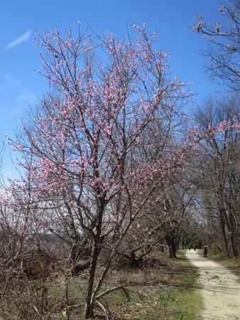 Delanco, Nueva Jersey: beginning to bloom