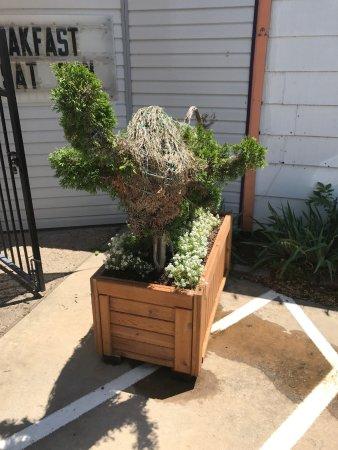 Keller, TX: Topiary bull