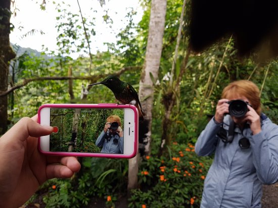 Tandayapa, Ecuador: a picture of the picture