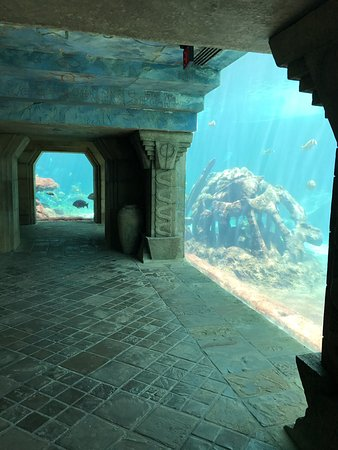 Atlantis, Royal Towers, Autograph Collection: One of the Aquariums