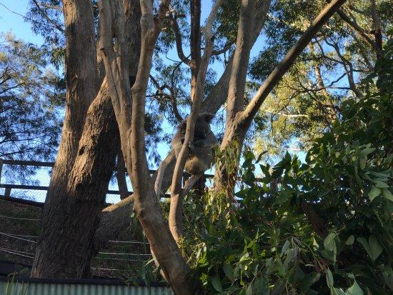 Gosford, Australia: photo1.jpg