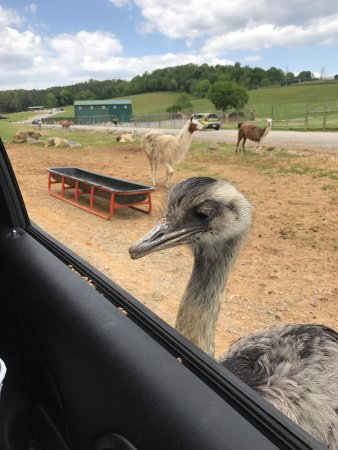 Virginia Safari Park: photo1.jpg