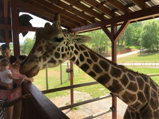 Virginia Safari Park: photo2.jpg
