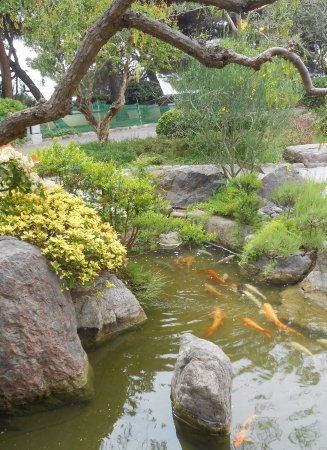 Japanese Gardens : Les carpes