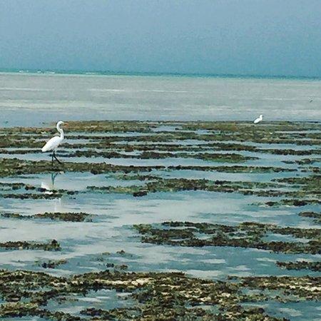 Ilha de Boipeba, BA: photo3.jpg