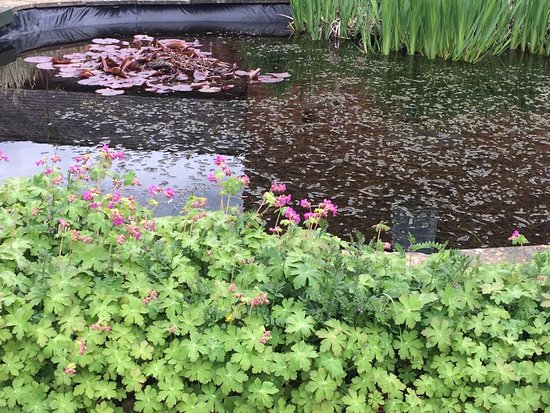 Etwall, UK: The little pond and the flora and fauna...